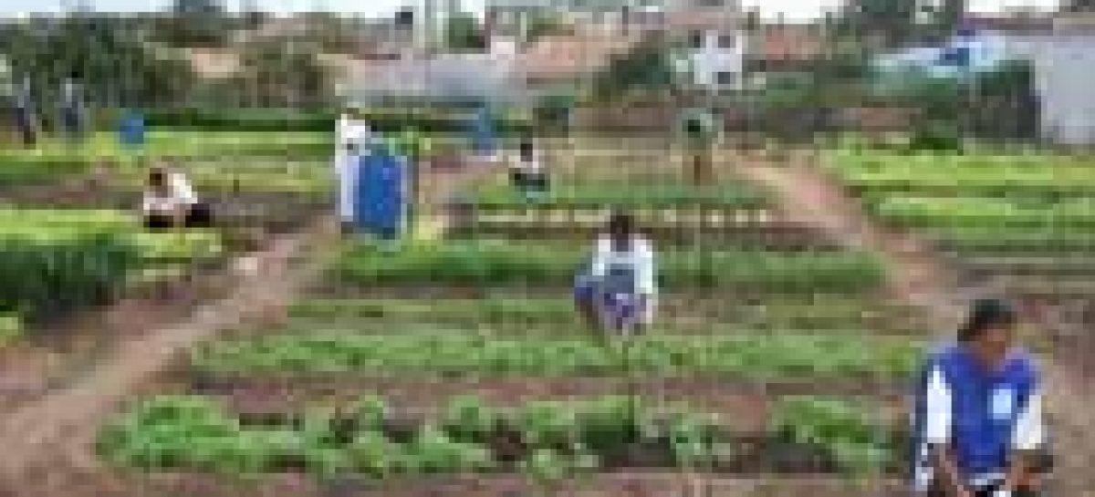 I Semana do Meio Ambiente é realizada em Chapadinha