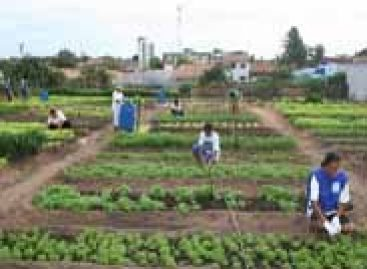 Pesquisadores investem na agricultura urbana de São Luís