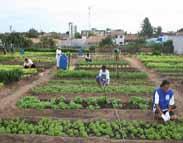 agriculturaurbanaM