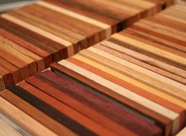 Diversidade das madeiras amazônicas é mal explorada, aponta pesquisador