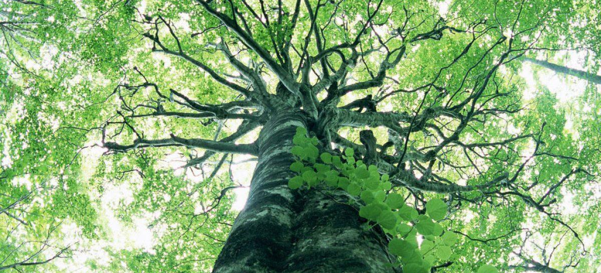 Árvore sintética pode combater aquecimento