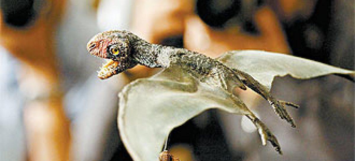 """Fóssil revela """"asa inteligente"""" de pterossauro"""