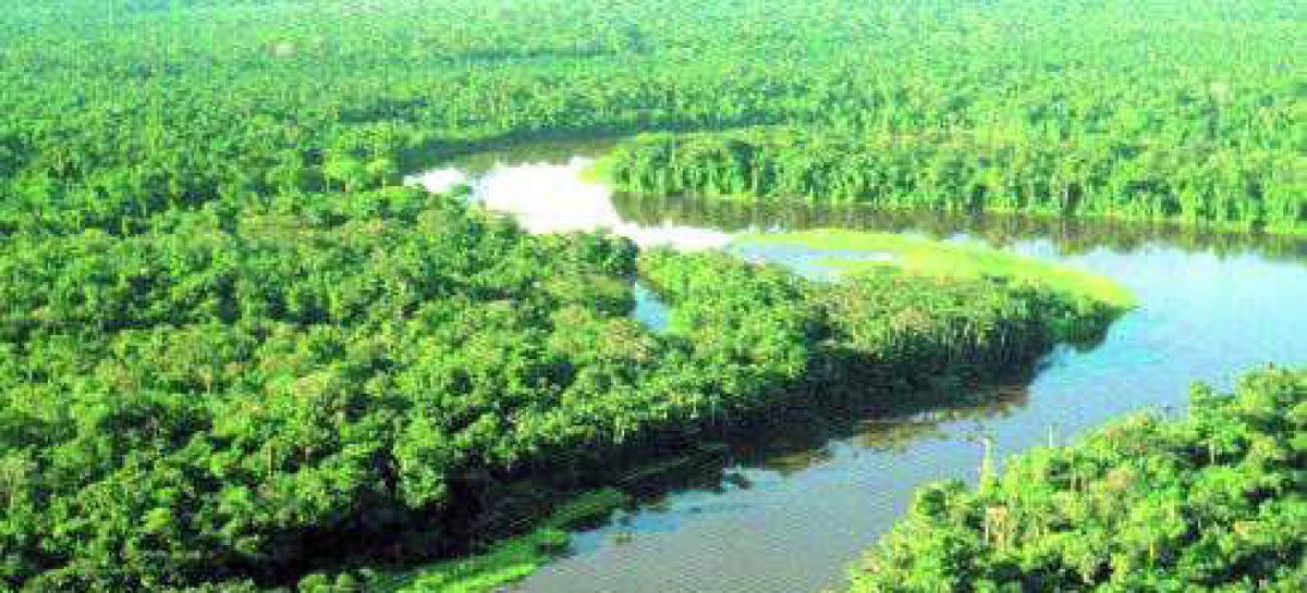 Lançada rede nacional de pesquisa voltada para biodiversidade brasileira