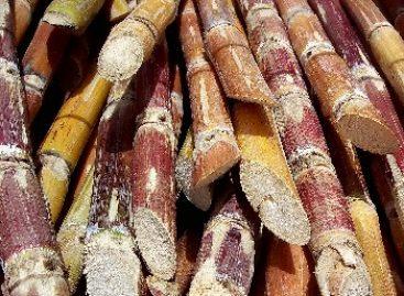 Lignoetanol estuda produção de combustível com palha da cana