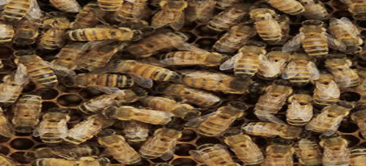 Inpa faz curso de criação de abelhas 'mirins' na Expoagro