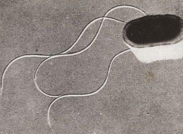 Nova metodologia para identificação de bactéria