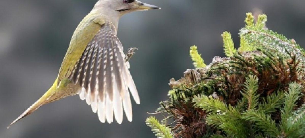 Lista de espécies ameaçadas de extinção no Brasil será revisada