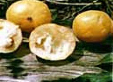 Pesquisadores farão melhoramento genético de frutas amazônicas