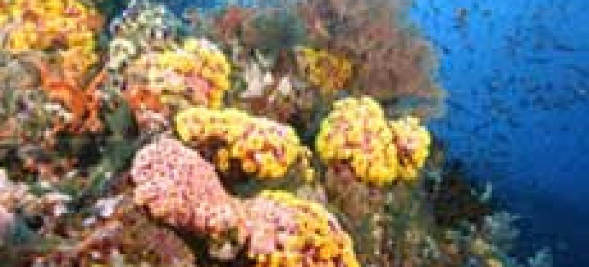 CNPq recebe projetos sobre biodiversidade marinha