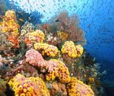 biodiversidade_marinha