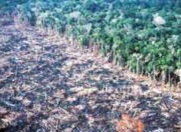 BNDES e Ministério do Meio Ambiente vão combater desmatamento da Mata Atlântica