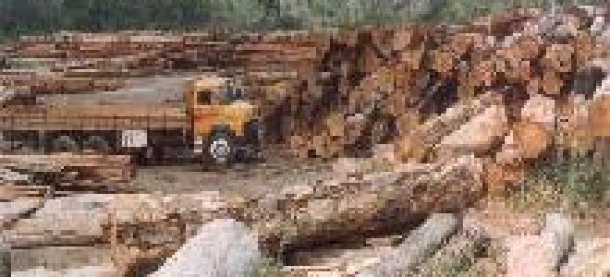 Ibama aplica R$ 128,5 milhões em multas no Pará