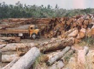 Desmatamento na Amazônia sofre aumento em relação a 2008 Meio ambiente