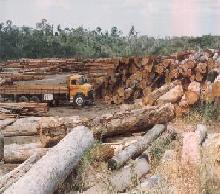 desmatamento_amazonia