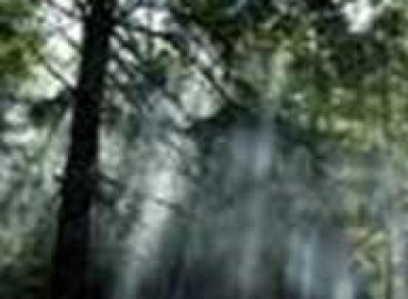 Floresta pode estar absorvendo menos carbono que o estimado