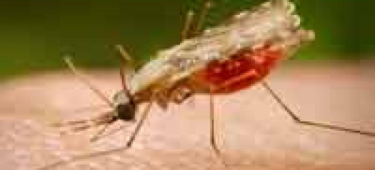 Amazonas tem pesquisadores aprovados na Rede Malária