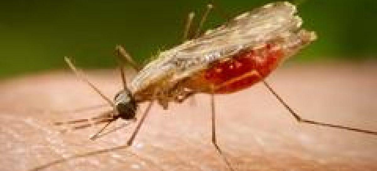 Divulgado resultado de edital para formação da Rede Malária