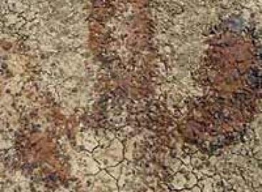 Descobertas as maiores pegadas de dinossauro do mundo