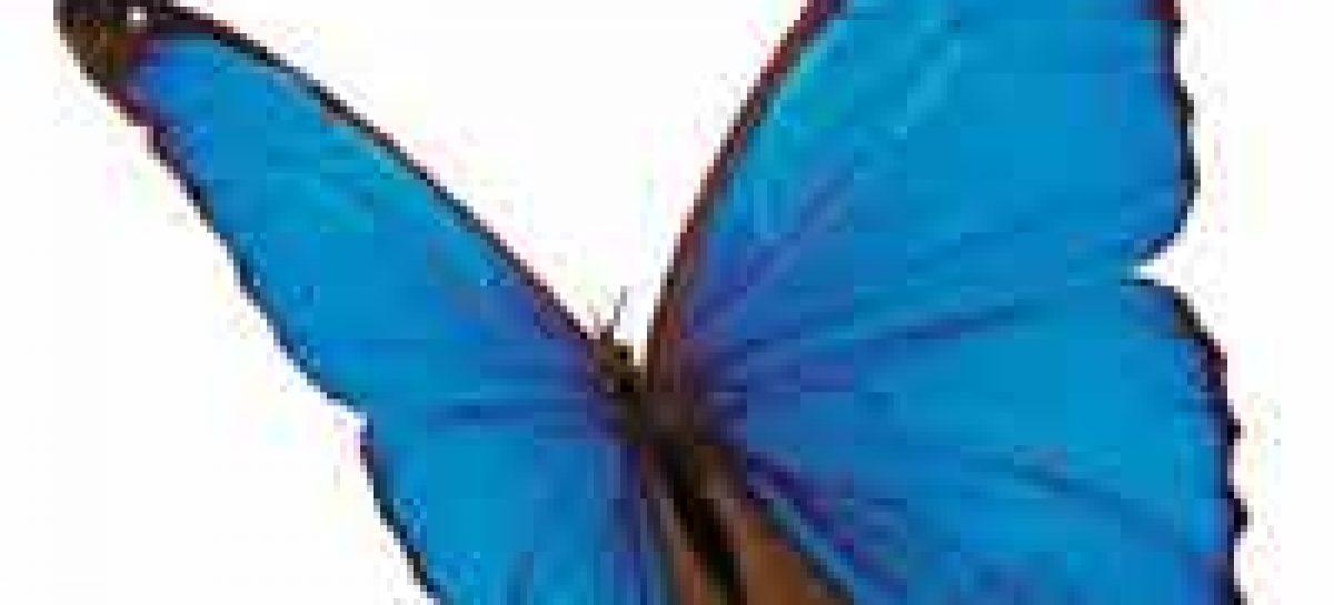 Maranhão, Goiás e Pará divulgam programação e novidades para SNCT 2009