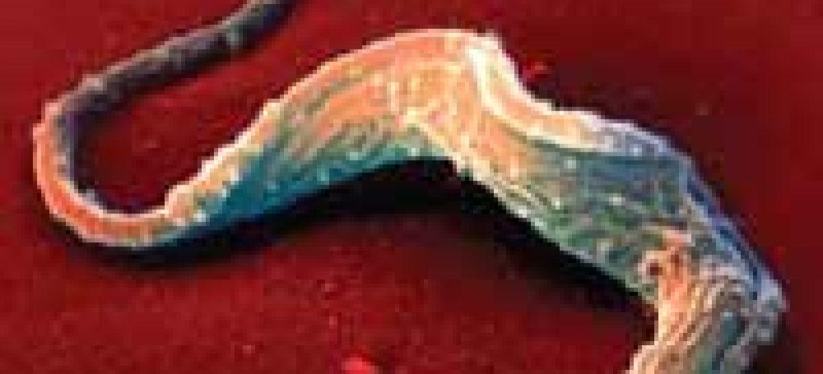 Gripe contra doença de Chagas?