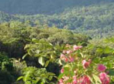 Edital apoia Pesquisas Ecológicas de Longa Duração