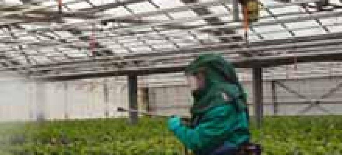Pragas resistentes são sério problema para a agricultura no Brasil