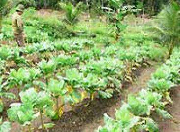 Inpa discute importância da agricultura orgânica