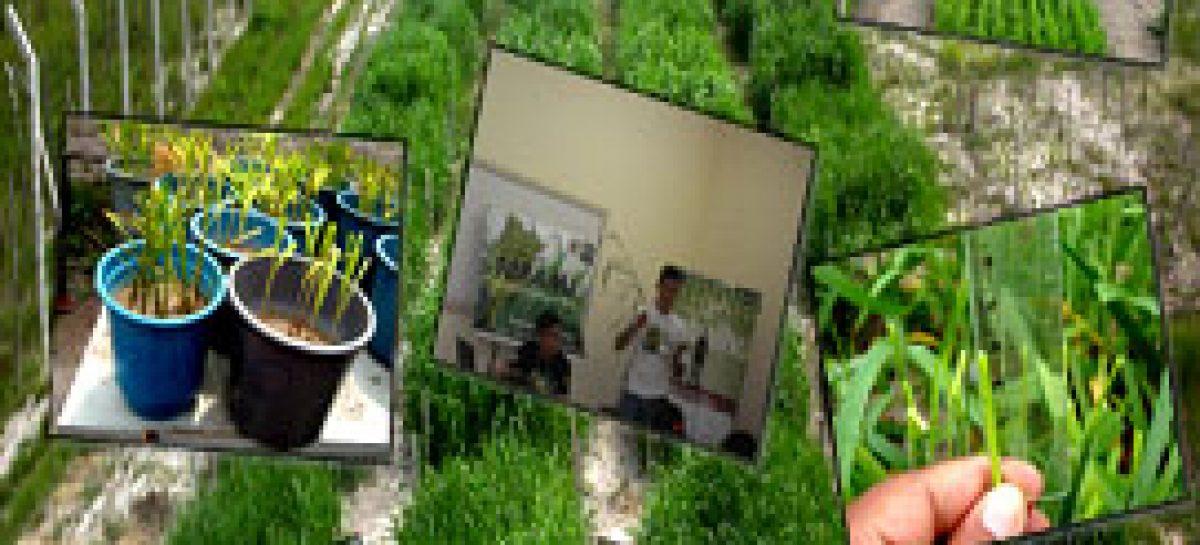 Grupo de pesquisa Fopama realiza Workshop e dia de Campo em Chapadinha