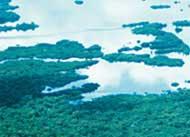 fim_desflorestamento
