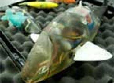 Pesquisadores criam nova raça de peixes robóticos