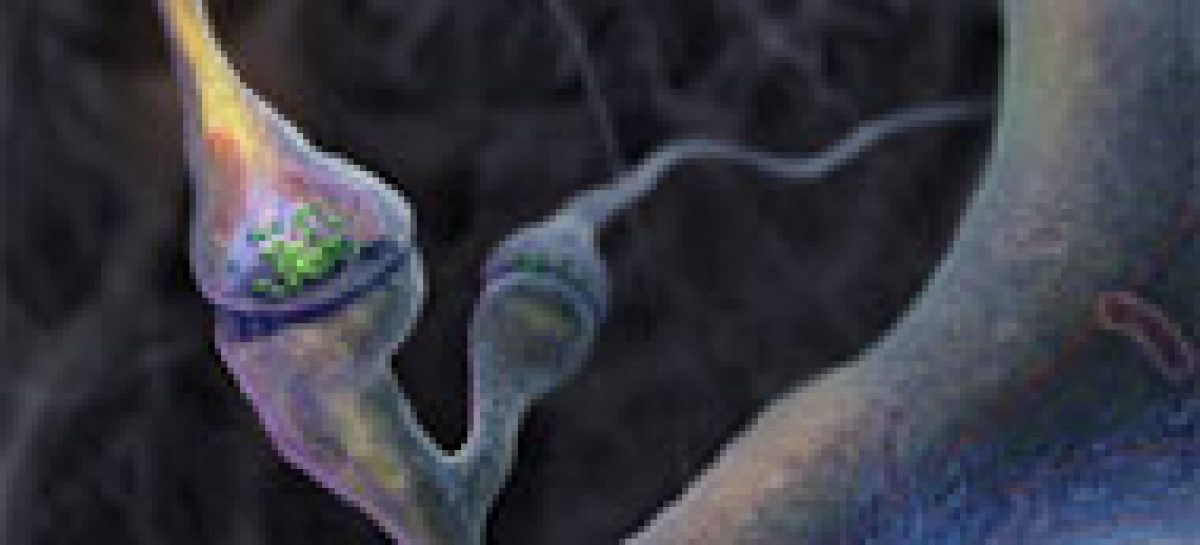 Aprendizagem forma sinapses