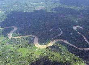 Projetos de pesquisa na área de biodiversidade recebem recursos de até R$ 13 milhões