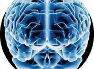 Cérebro é mais econômico do que se pensava