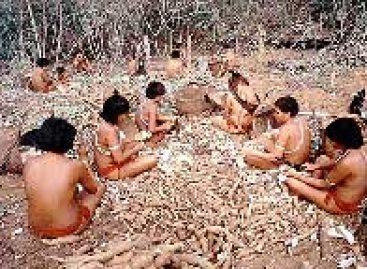 Novo número do Destaque Amazônia traz pesquisa sobre a mandioca