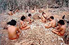 indios_mandioca