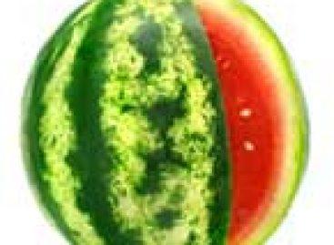 Refugo da melancia será o próximo biocombustível?