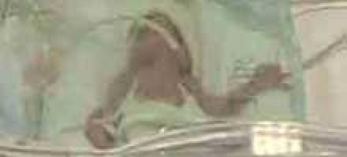 Mulher têm sêxtuplos no sul da Itália