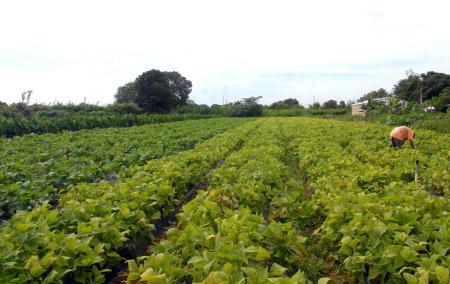 agriculturafami