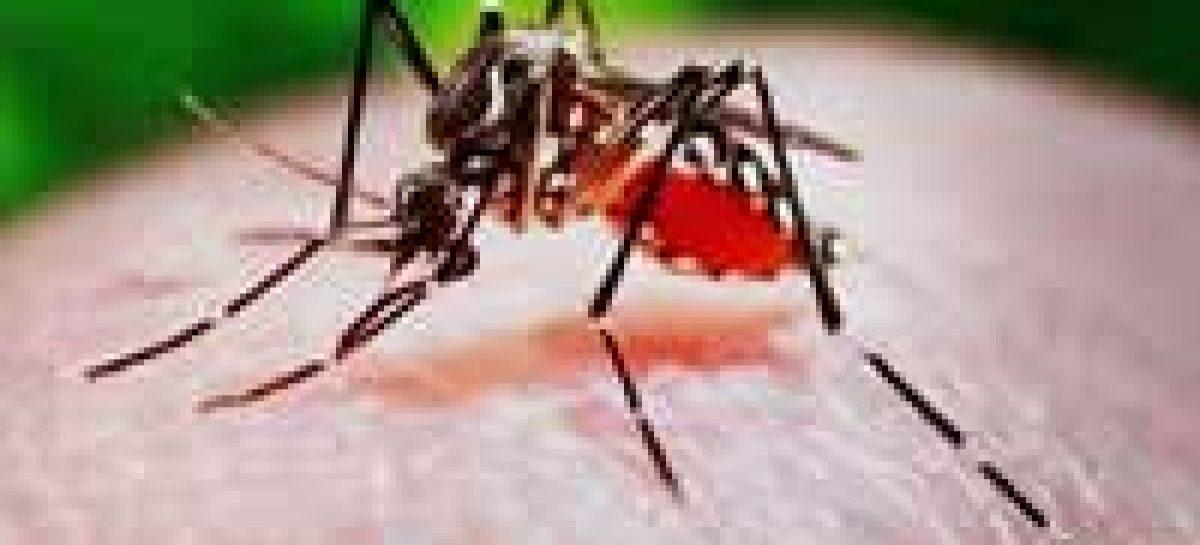 Pesquisadores criam inseticida genético para mosquito da dengue