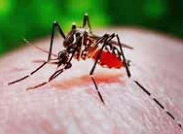 Rede Nacional contra a dengue terá 22,7 milhões