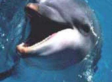 Golfinhos podem ajudar a compreender doenças humanas