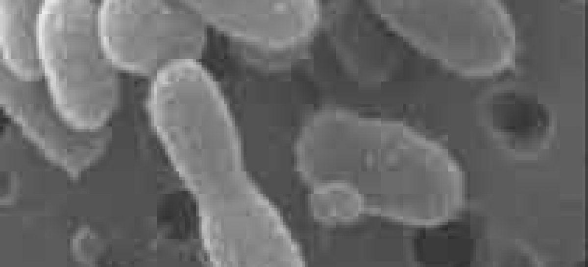 Microrganismo ressurge após 120 mil anos