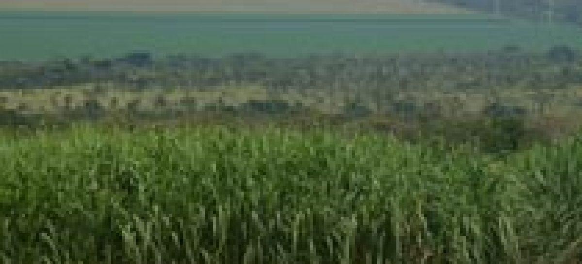 Embrapa pesquisa fontes alternativas para aumentar a produção de bioetanol
