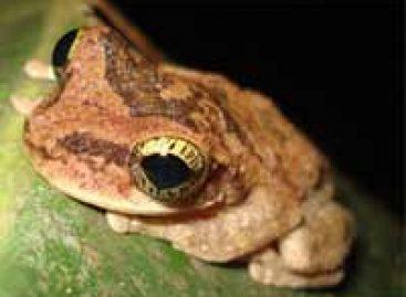 Congresso de zoologia debate a conservação da fauna brasileira
