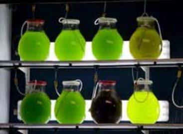 Produção de biocombustíveis algáceos precisa de proximidade física