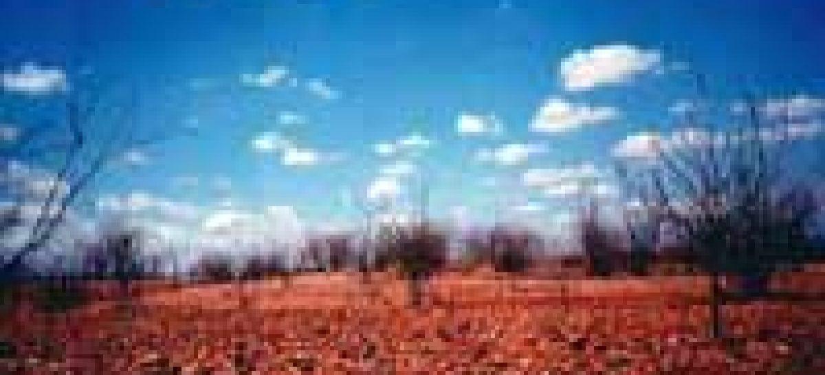 Em seis anos, desmatamento chega a 45% da caatinga