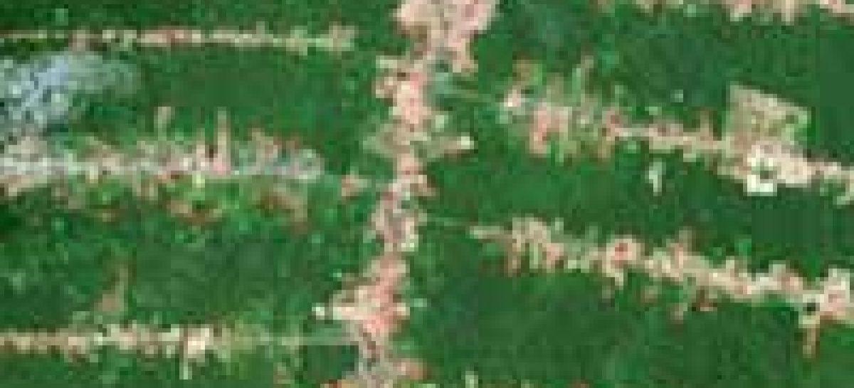 Moradores urbanos causam desmatamento no século 21