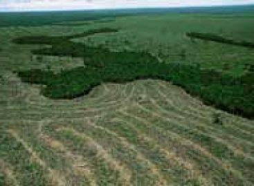 Ministério do Meio Ambiente e Fiocruz vão assinar acordo de cooperação técnico-científica