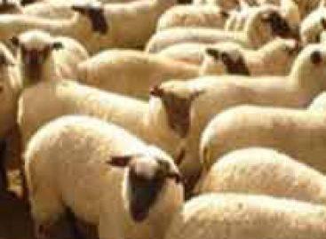 Capacitação na área de caprinos e ovinos tem recursos de até R$ 3 milhões