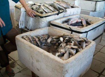 Pesquisadores do CCAA analisam a qualidade do peixe comercializado em Chapadinha